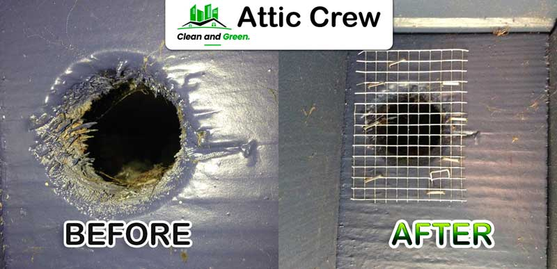 Rodent Proofing 187 Attic Crew
